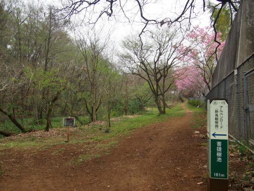 20160402・アルペンルート桜1-23