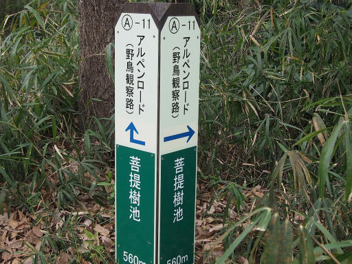 20160402・アルペンルート桜1-20