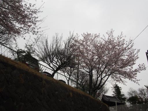 20160402・アルペンルート桜2-18