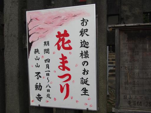 20160402・アルペンルート桜2-14