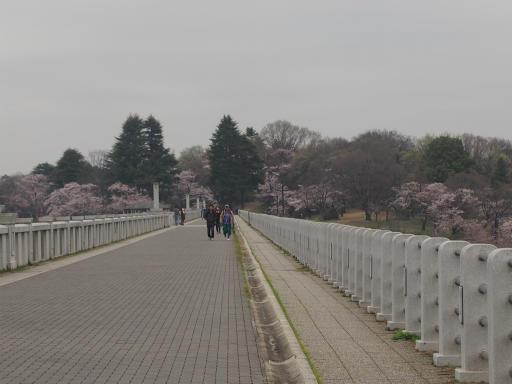 20160402・アルペンルート桜2-21