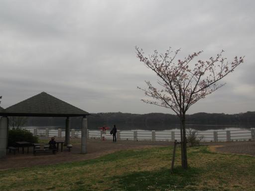 20160402・アルペンルート桜2-19