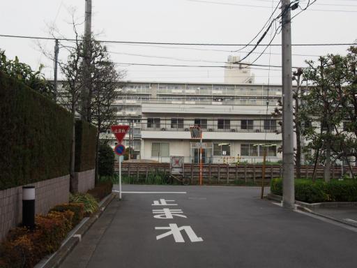 20160403・小手指東川の桜12