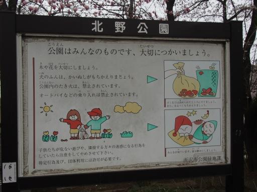 20160403・小手指東川の桜09・中