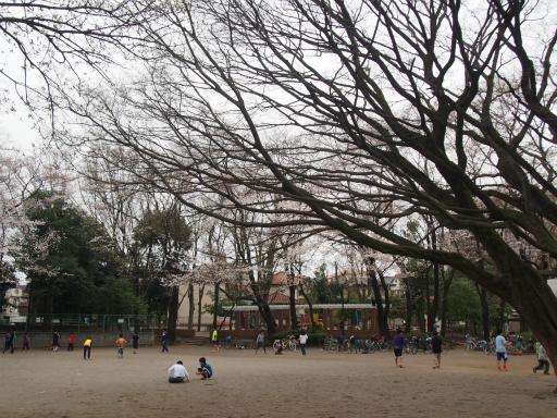 20160403・小手指東川の桜08