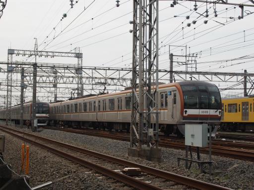 20160403・小手指東川の桜14