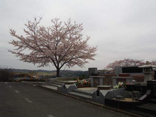 20160402・アルペンルート桜・空06・尾崎豊の墓と空