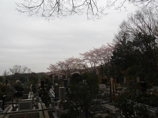 20160402・アルペンルート桜・空03