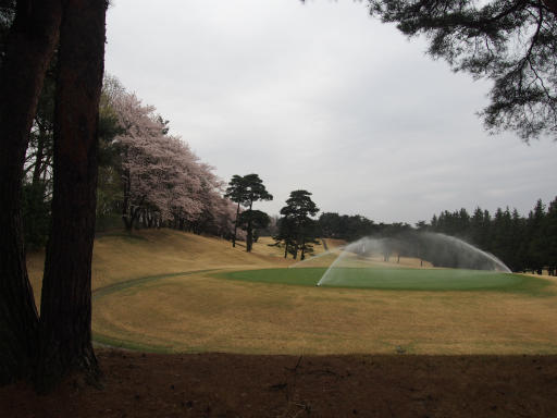 20160402・アルペンルート桜・空02