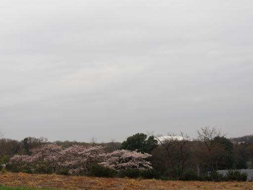 20160402・アルペンルート桜・空01