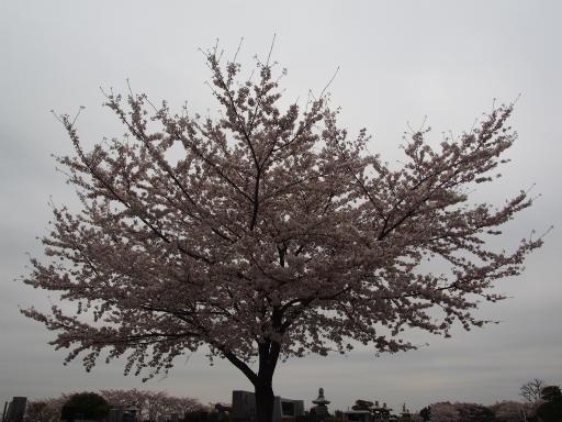 20160402・アルペンルート桜・空07