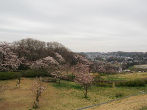 20160402・アルペンルート桜・空16