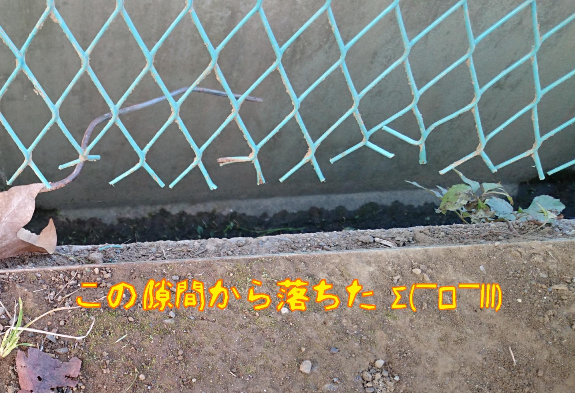 20151025145947a56.jpg