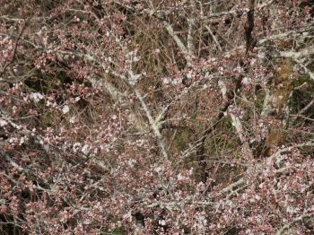 2016..03.30.桜2