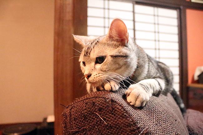 blog_000006452.jpg