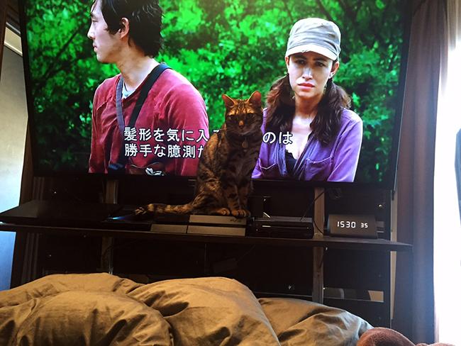 blog_000006546.jpg