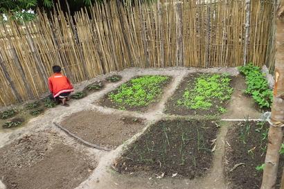 家庭菜園(ラオス)