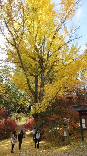 10月31日大町霊松寺 (3) (287x510)