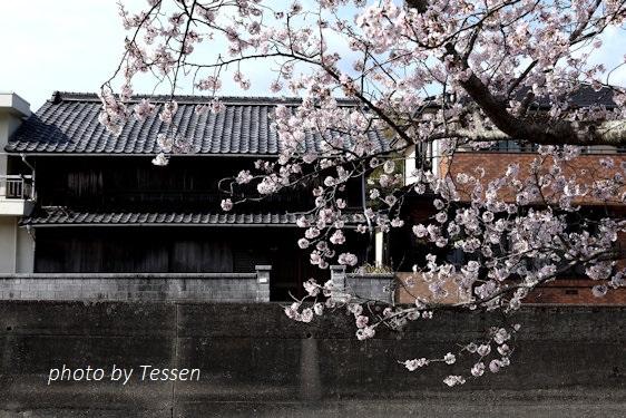 IMG_1611桜