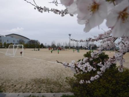 1子供のサッカーと桜
