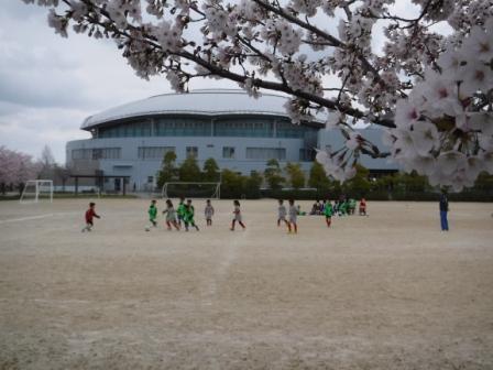 1子供のサッカーと桜4