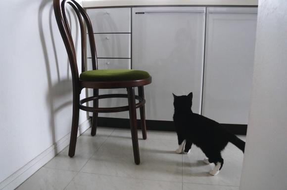 猫の匂い…