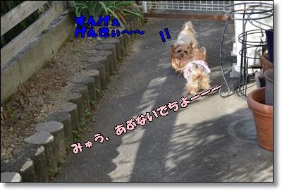 DSC_0939_20151025234108fbb.jpg