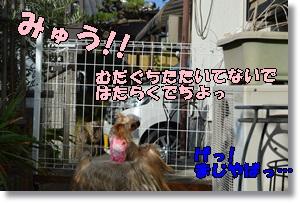 DSC_0945_20151025234136d77.jpg