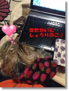 image1254.jpg