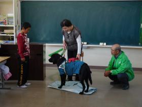 盲導犬1511-3