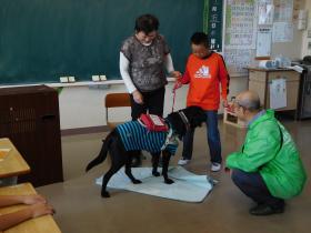 盲導犬1511-4