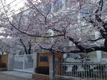 モテる女が過ごす桜の季節-青春時代を取り戻す為に-1