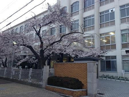 モテる女が過ごす桜の季節-青春時代を取り戻す為に-2