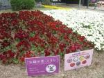 宝塚の花 スミレ