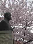小林一三胸像と桜