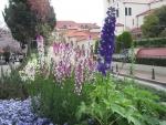花の道の草花1