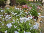 花の道の草花2