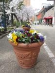 花の道の草花4