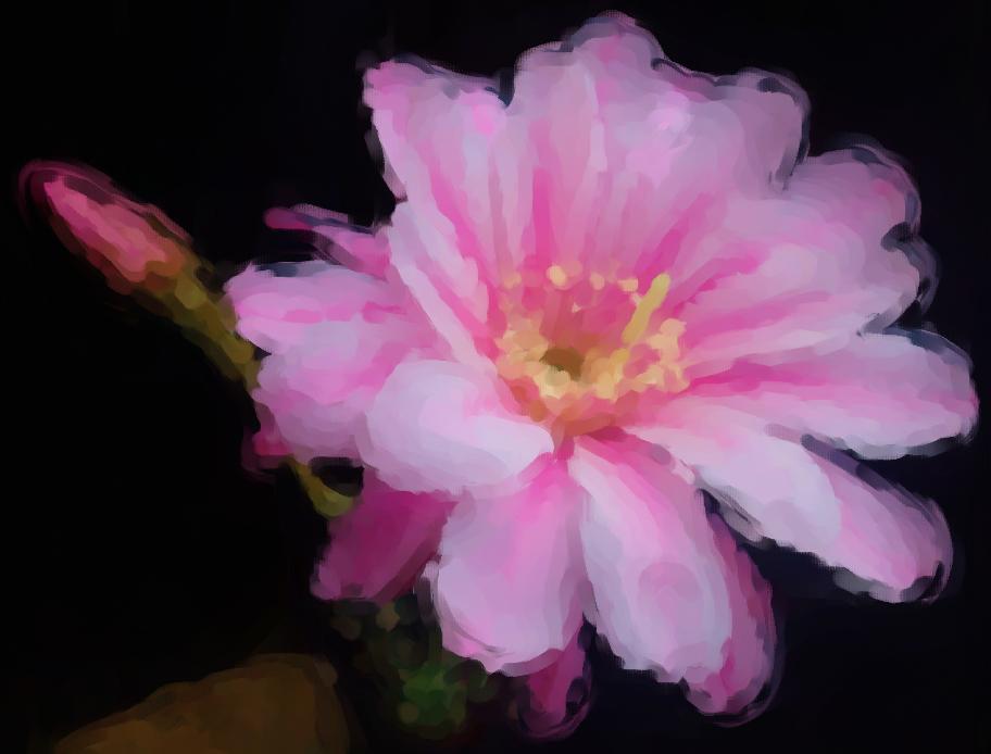 オブレパンダの花