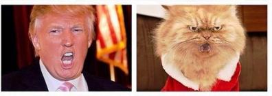 次期アメリカ大統領候補ドナルドと似た猫顔の1つ目