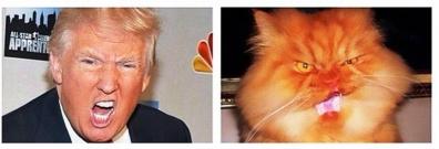 次期アメリカ大統領候補ドナルドと似た猫顔の2つ目