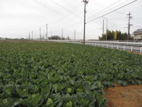 キャベツ畑と国道1号