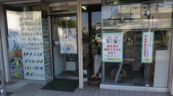 shinsou.jpg