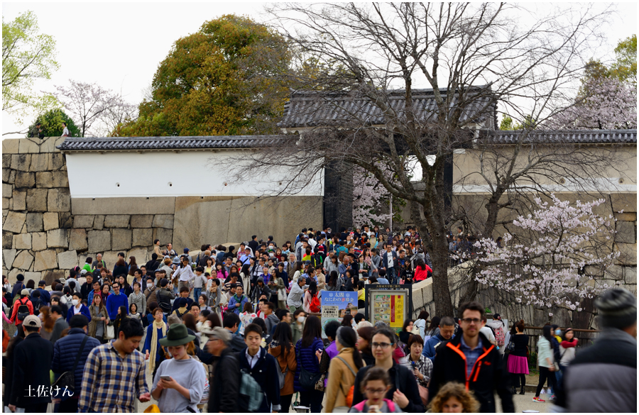 大阪城 桜6