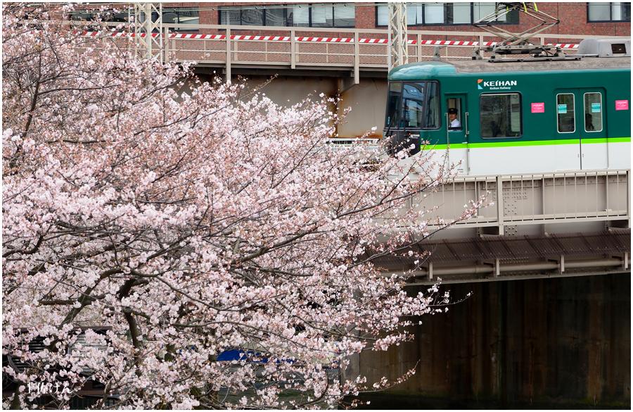 大阪城 桜5