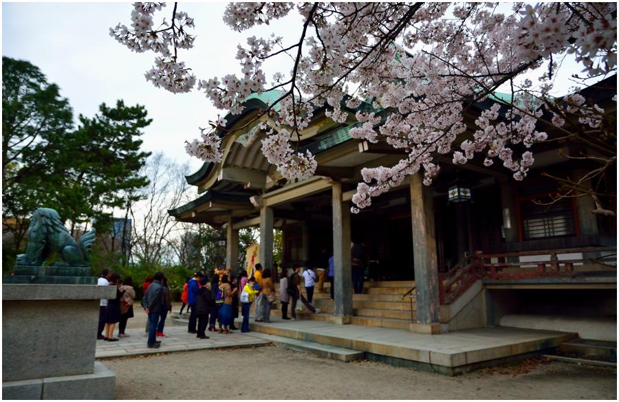 大阪城 桜・助手4