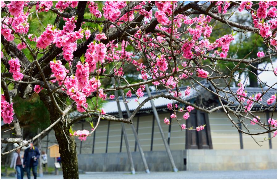 京都御苑・助手1