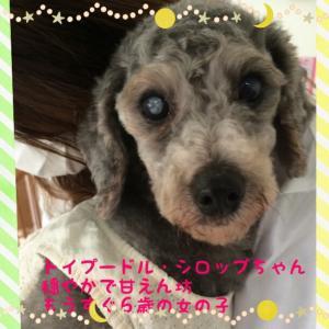 fc2blog_20160323183550969.jpg