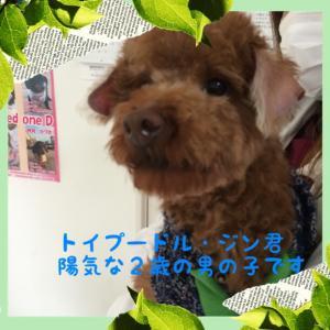 fc2blog_201603231835512a8.jpg
