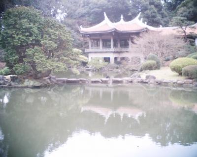 カワウ・新宿御苑:R2